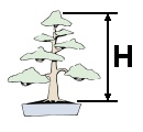 Bonsai Size Classification Height